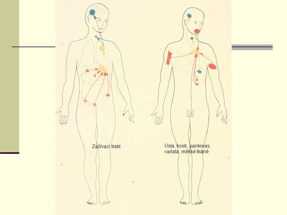 Zažívací trakt Ústa, kosti, pankreas, varlata, měkké tkáně