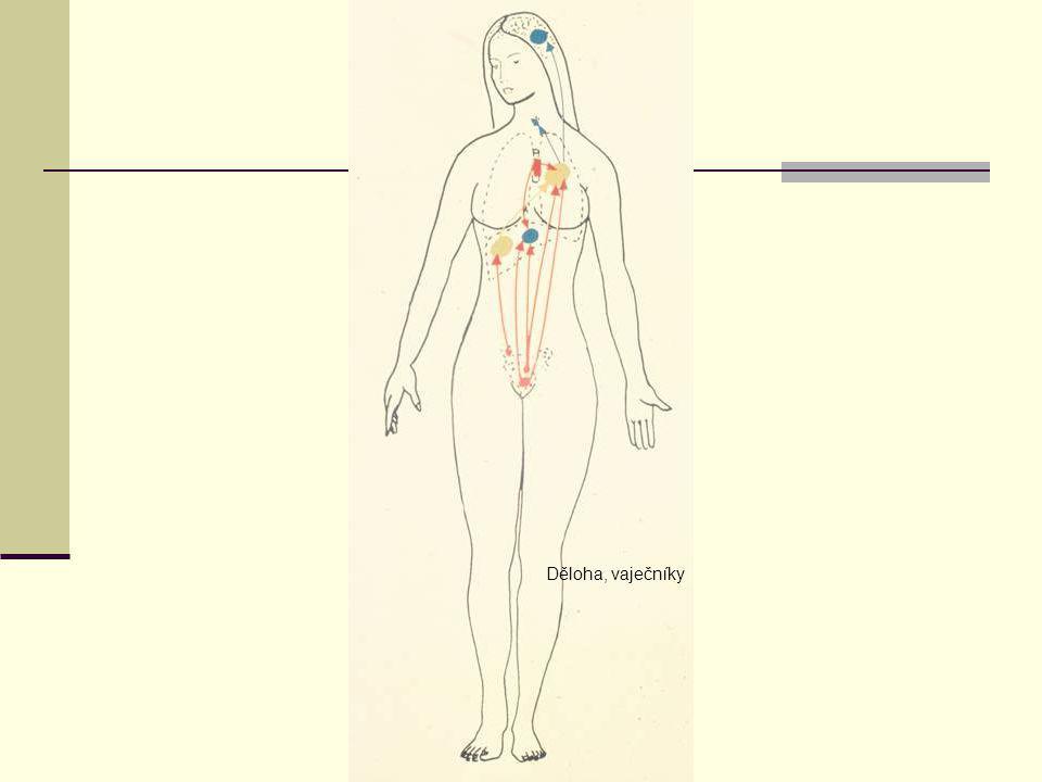Děloha, vaječníky