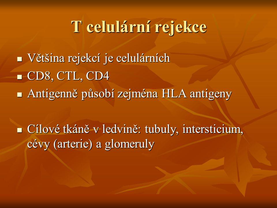 T celulární rejekce Většina rejekcí je celulárních CD8, CTL, CD4