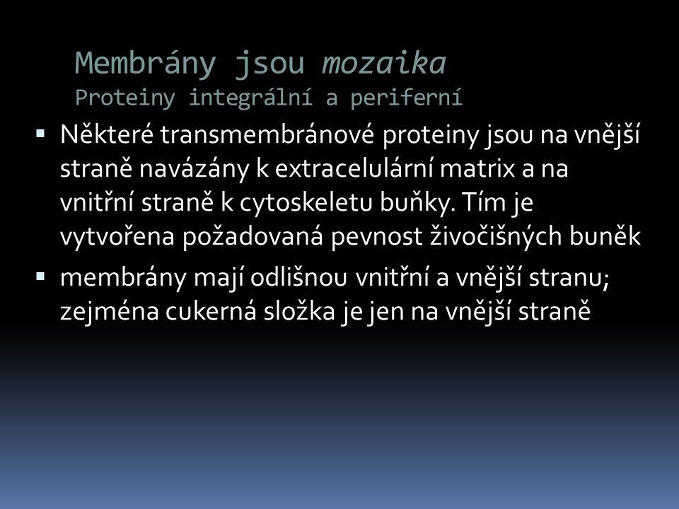 Membrány jsou mozaika Proteiny integrální a periferní