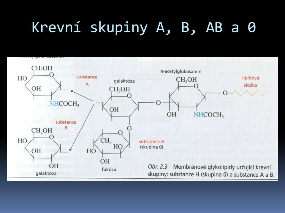 Krevní skupiny A, B, AB a 0