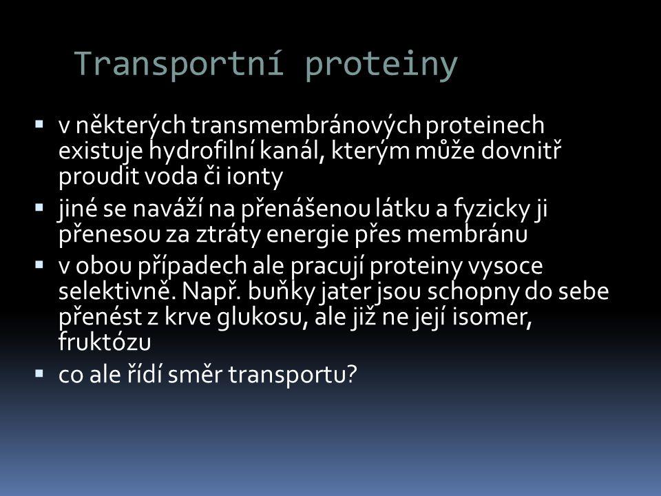 Transportní proteiny v některých transmembránových proteinech existuje hydrofilní kanál, kterým může dovnitř proudit voda či ionty.