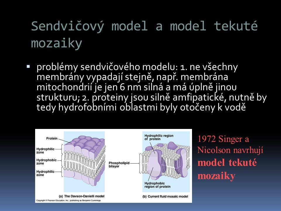Sendvičový model a model tekuté mozaiky
