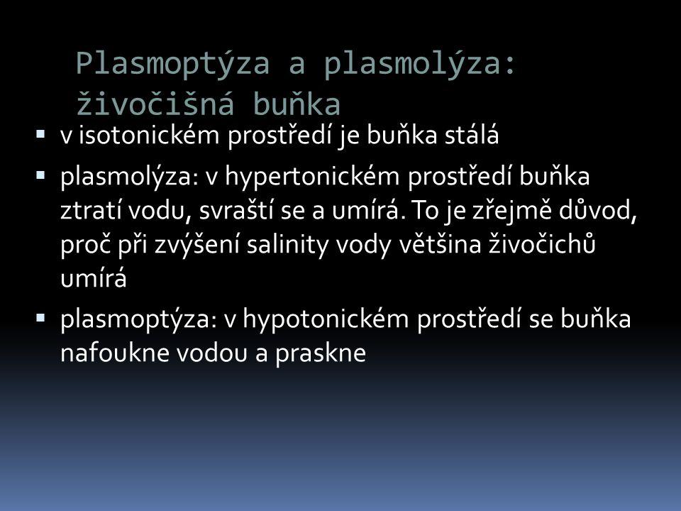 Plasmoptýza a plasmolýza: živočišná buňka