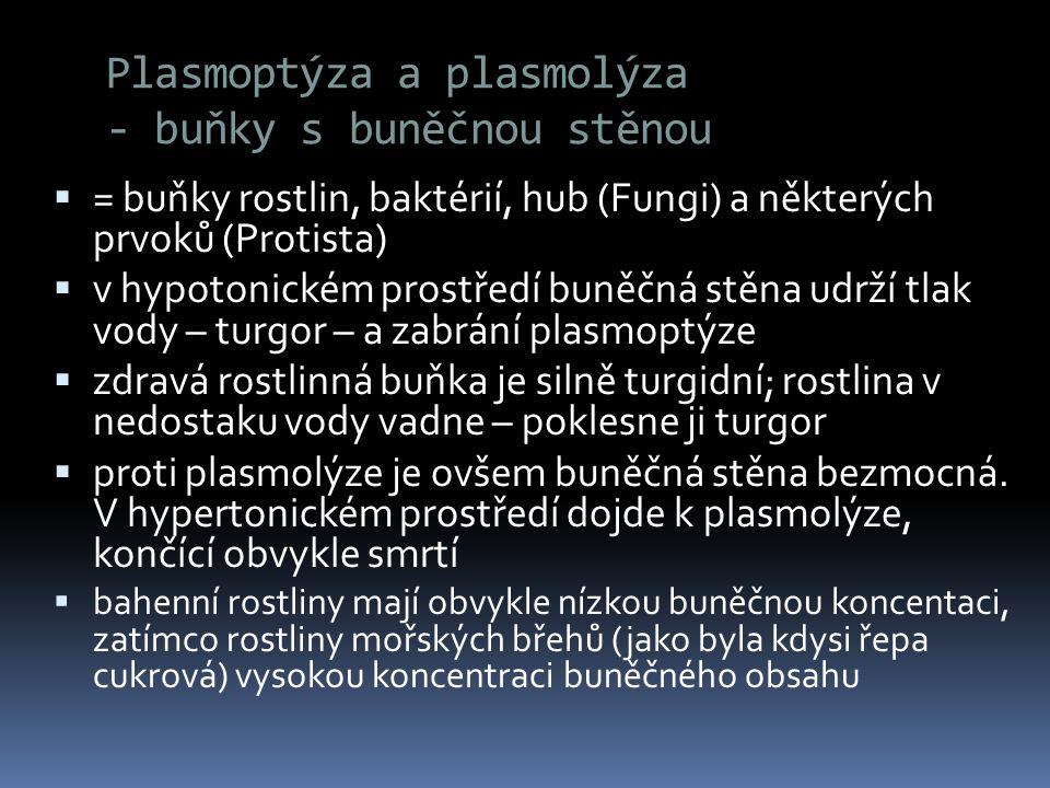 Plasmoptýza a plasmolýza - buňky s buněčnou stěnou
