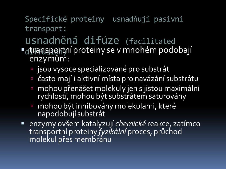 transportní proteiny se v mnohém podobají enzymům: