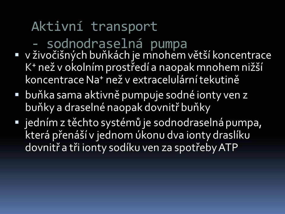Aktivní transport - sodnodraselná pumpa