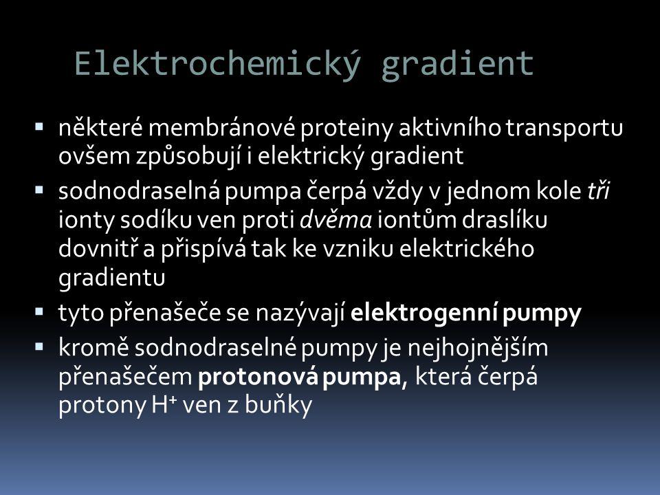 Elektrochemický gradient