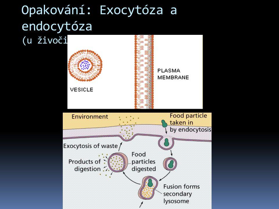 Opakování: Exocytóza a endocytóza (u živočišné i rostlinné buňky)