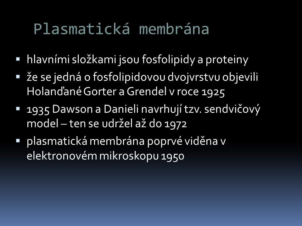Plasmatická membrána hlavními složkami jsou fosfolipidy a proteiny
