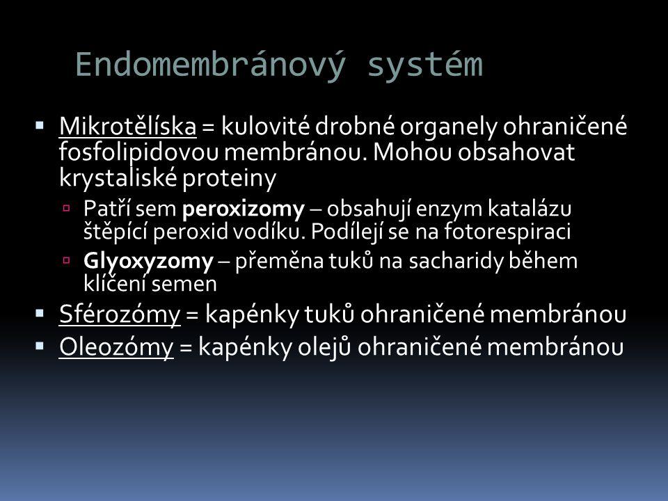 Endomembránový systém