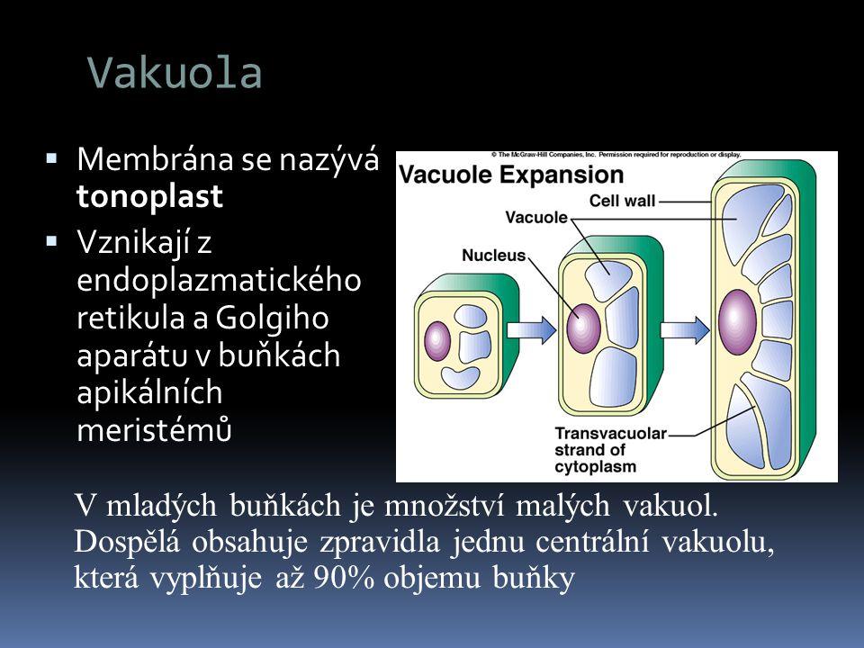 Vakuola Membrána se nazývá tonoplast