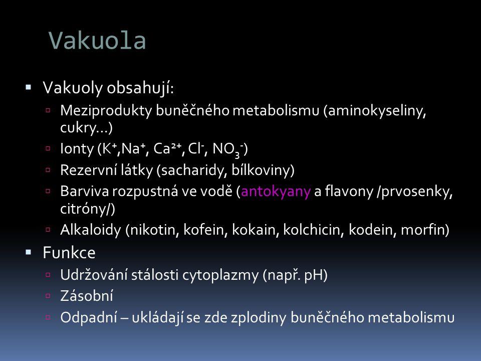 Vakuola Vakuoly obsahují: Funkce