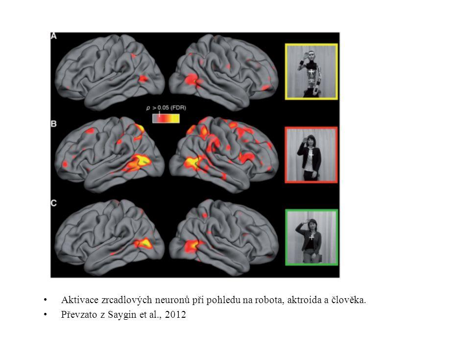Aktivace zrcadlových neuronů při pohledu na robota, aktroida a člověka.