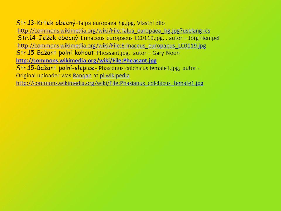 Str.13-Krtek obecný-Talpa europaea hg.jpg, Vlastní dílo
