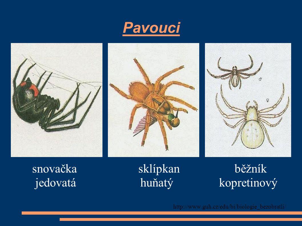 Pavouci snovačka sklípkan běžník jedovatá huňatý kopretinový
