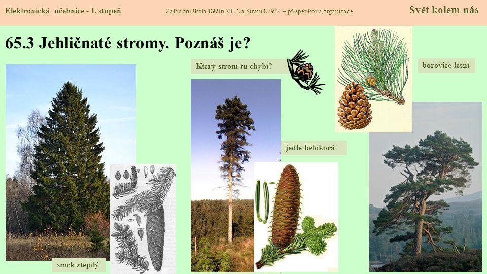 65.3 Jehličnaté stromy. Poznáš je