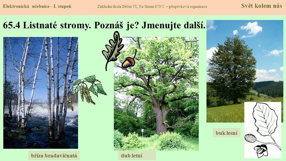 65.4 Listnaté stromy. Poznáš je Jmenujte další.