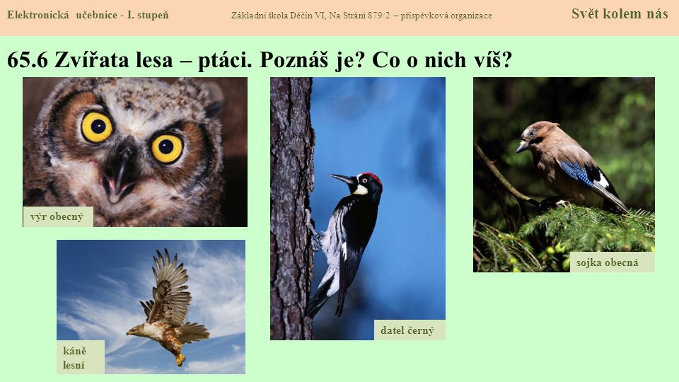 65.6 Zvířata lesa – ptáci. Poznáš je Co o nich víš