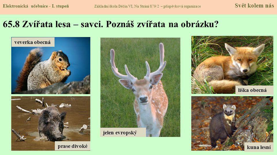65.8 Zvířata lesa – savci. Poznáš zvířata na obrázku