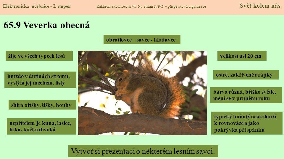 65.9 Veverka obecná Vytvoř si prezentaci o některém lesním savci.