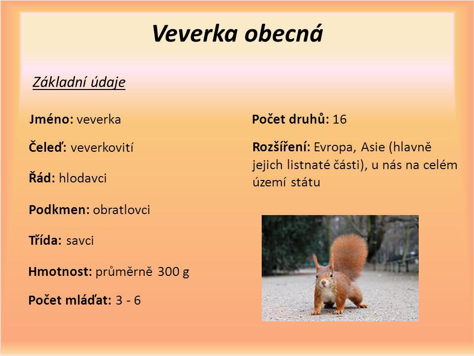 Veverka obecná Základní údaje Jméno: veverka Počet druhů: 16
