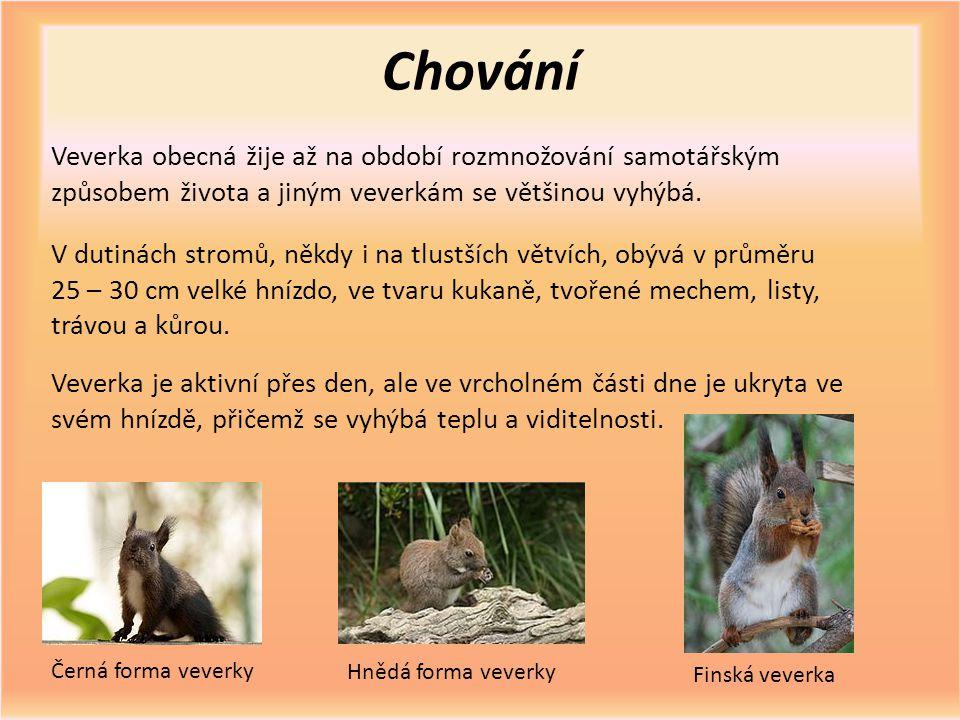 Chování Veverka obecná žije až na období rozmnožování samotářským způsobem života a jiným veverkám se většinou vyhýbá.