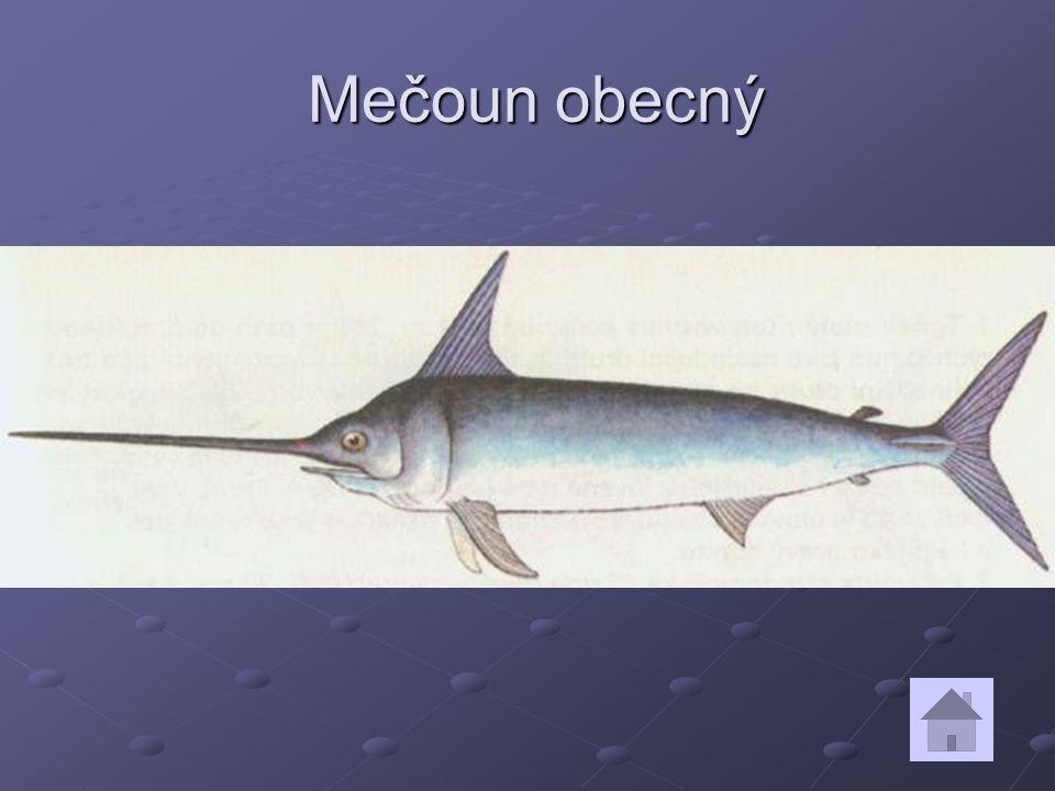 Mečoun obecný