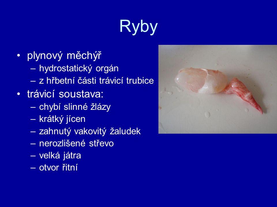 Ryby plynový měchýř trávicí soustava: hydrostatický orgán