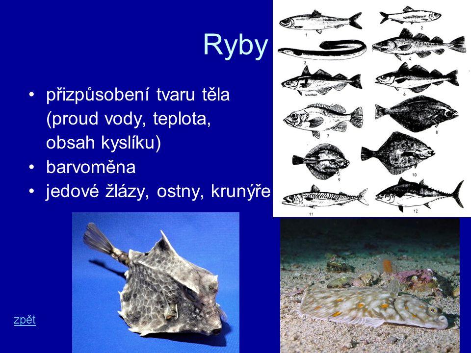 Ryby přizpůsobení tvaru těla (proud vody, teplota, obsah kyslíku)