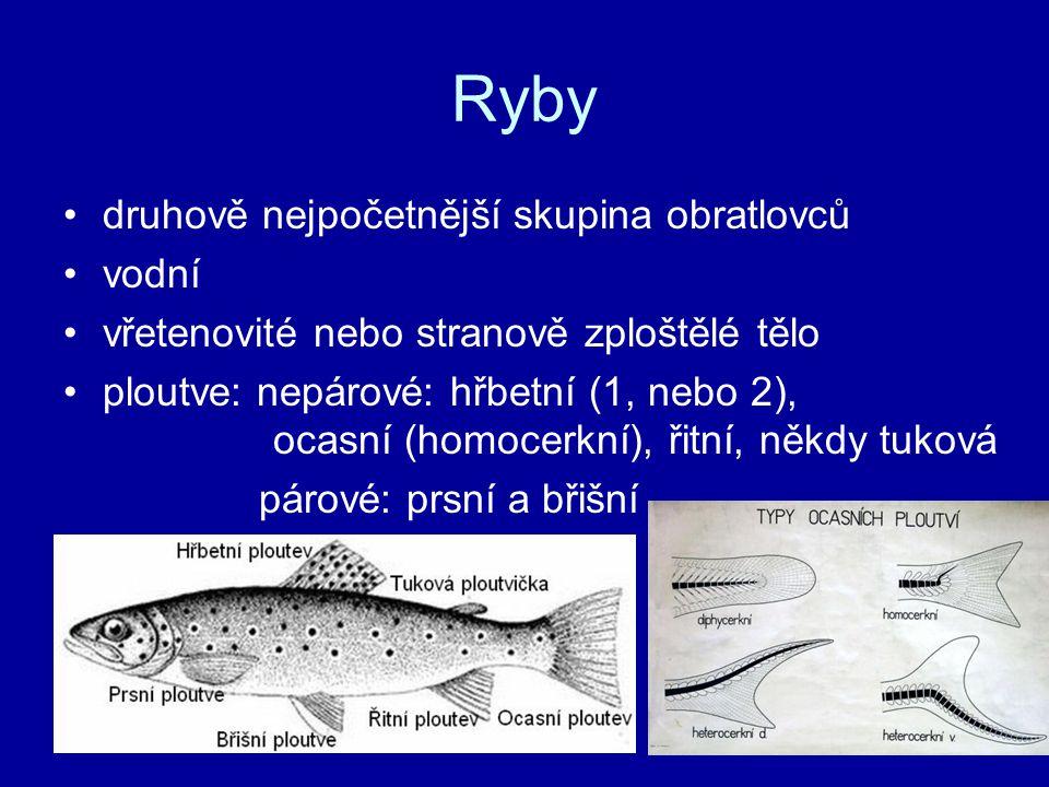 Ryby druhově nejpočetnější skupina obratlovců vodní