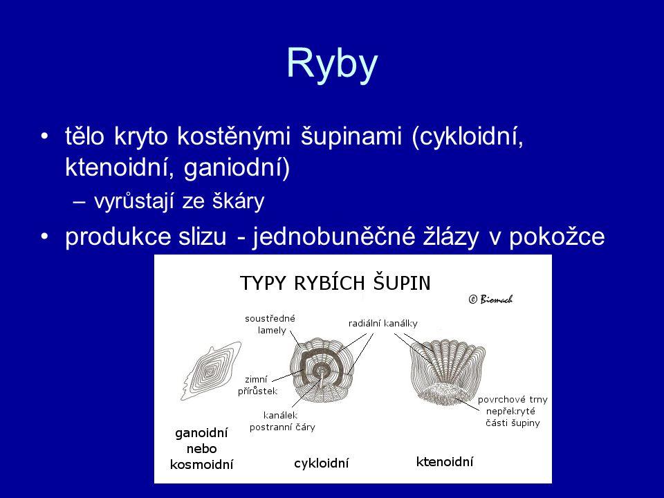 Ryby tělo kryto kostěnými šupinami (cykloidní, ktenoidní, ganiodní)