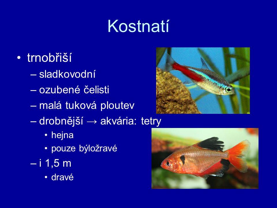 Kostnatí trnobřiší sladkovodní ozubené čelisti malá tuková ploutev