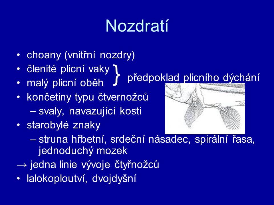 } předpoklad plicního dýchání