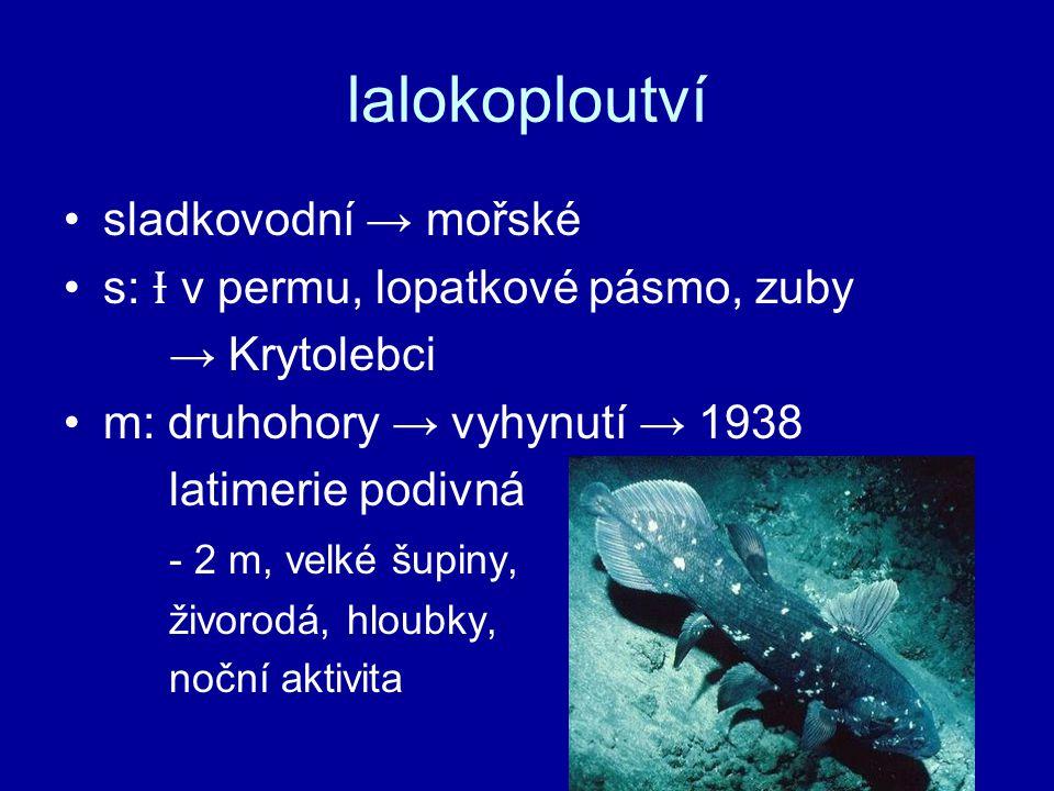 lalokoploutví sladkovodní → mořské s: Ɨ v permu, lopatkové pásmo, zuby
