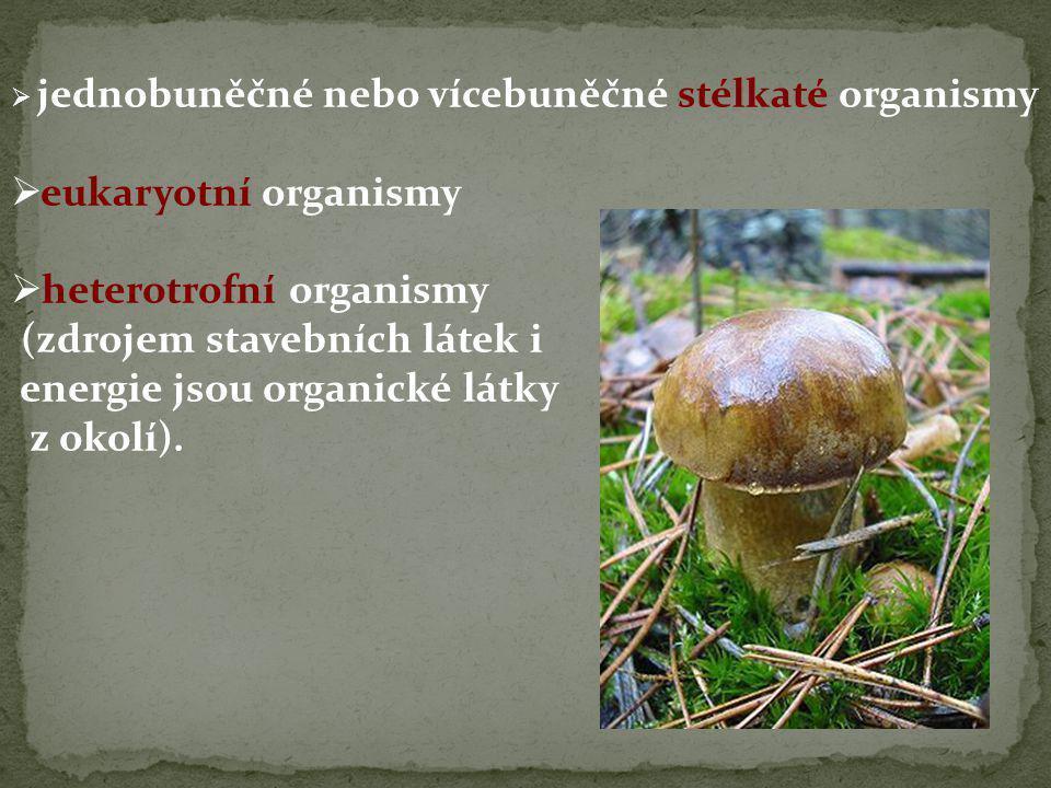 heterotrofní organismy (zdrojem stavebních látek i