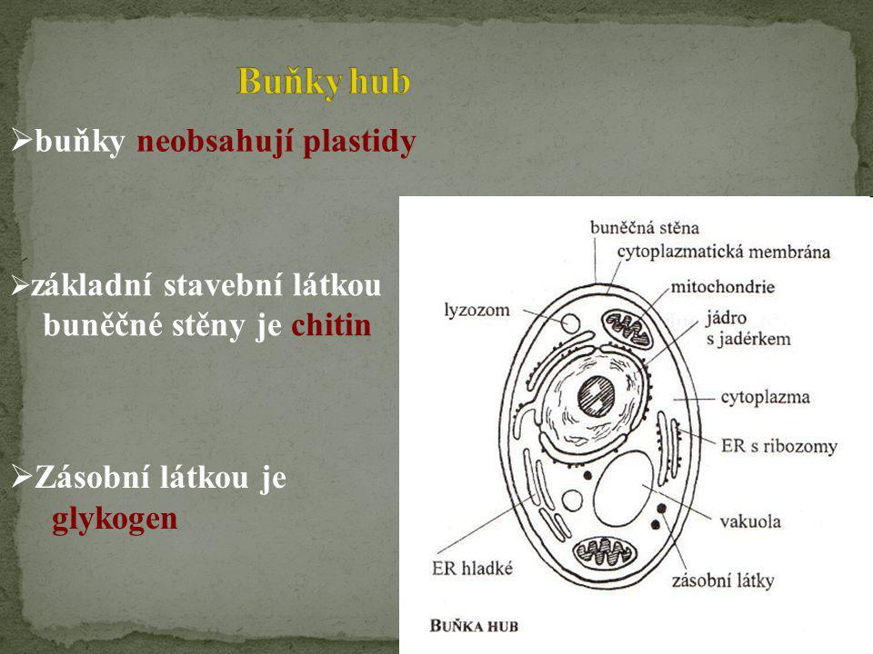Buňky hub buňky neobsahují plastidy buněčné stěny je chitin