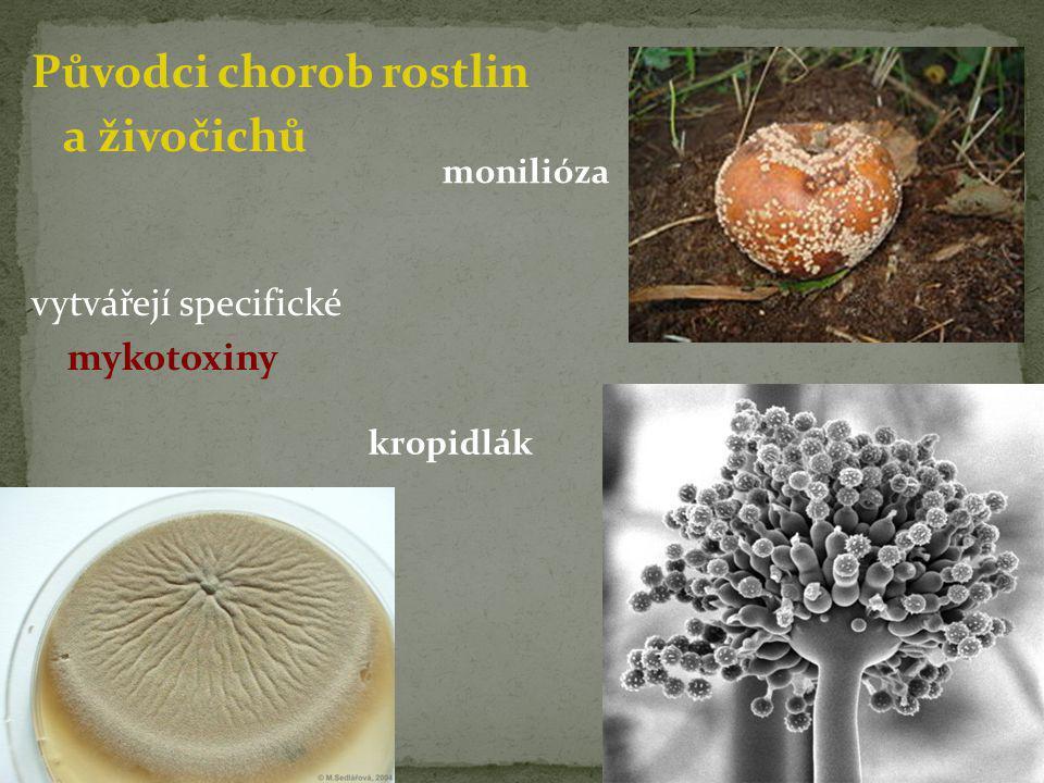 Původci chorob rostlin a živočichů