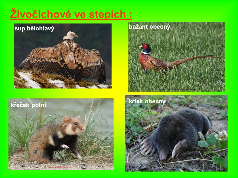 Živočichové ve stepích :