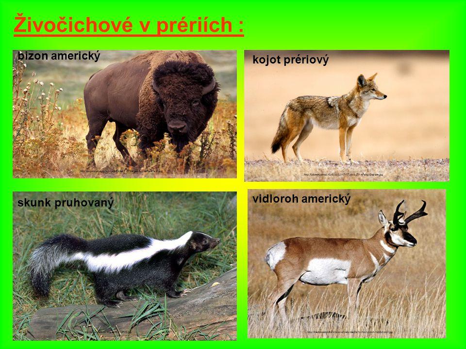 Živočichové v prériích :