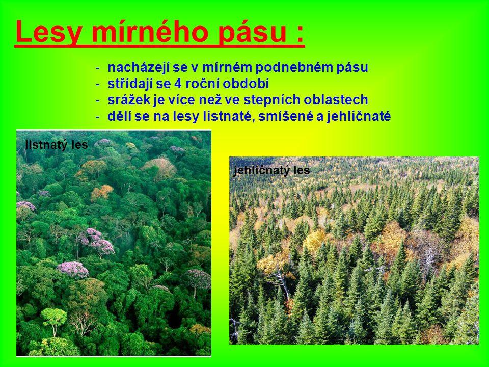 Lesy mírného pásu : nacházejí se v mírném podnebném pásu