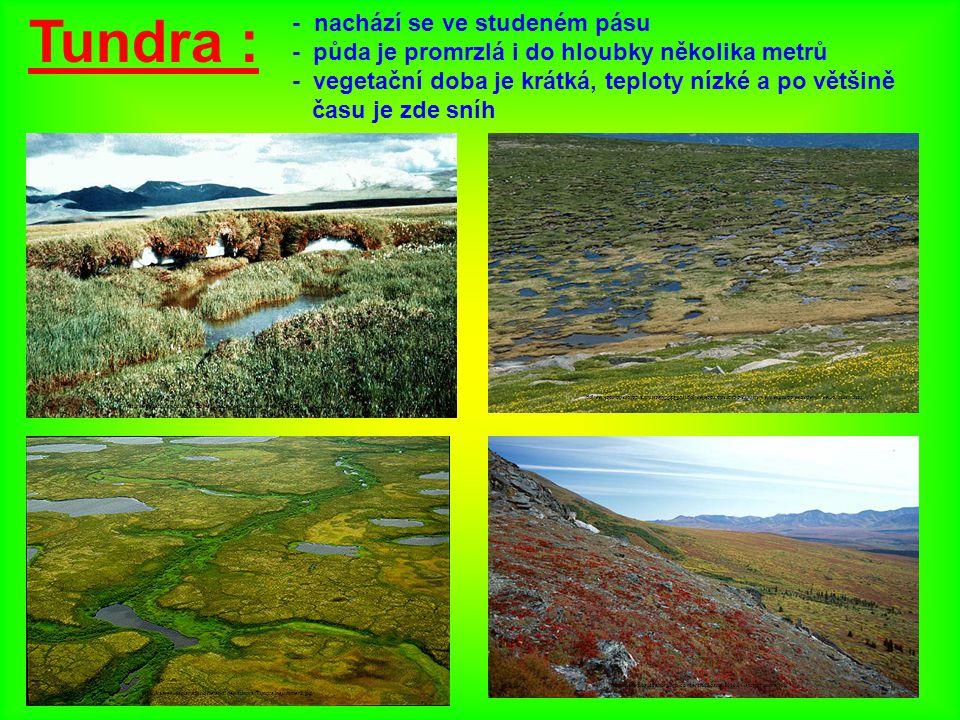 Tundra : - nachází se ve studeném pásu