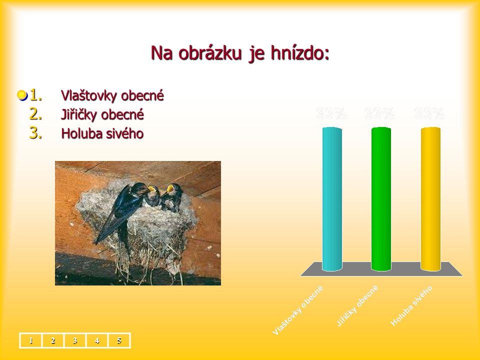 Na obrázku je hnízdo: Vlaštovky obecné Jiřičky obecné Holuba sivého 1