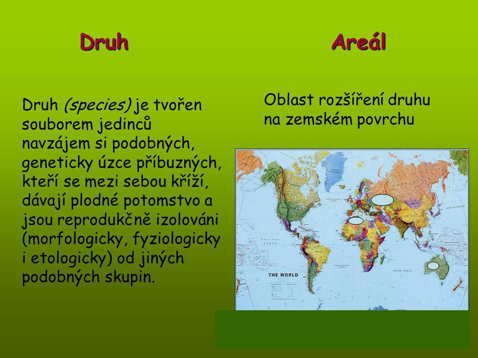 Druh Areál Oblast rozšíření druhu