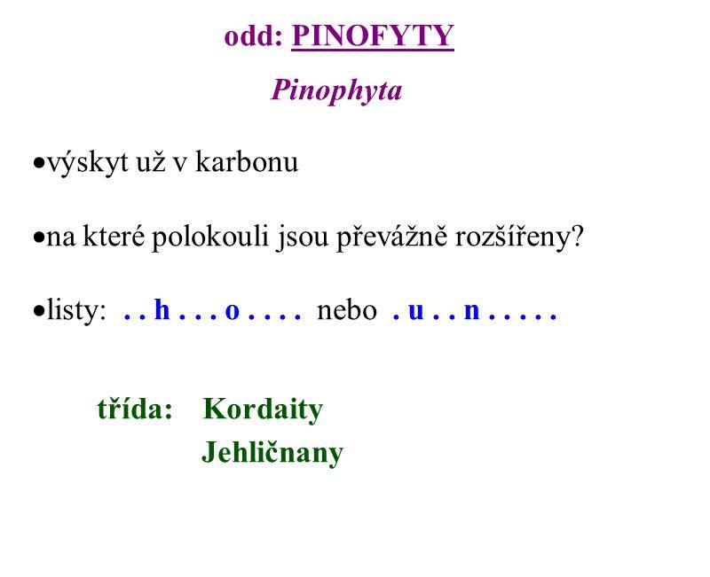 odd: PINOFYTY Pinophyta. výskyt už v karbonu. na které polokouli jsou převážně rozšířeny listy: . . h . . . o . . . . nebo . u . . n . . . . .