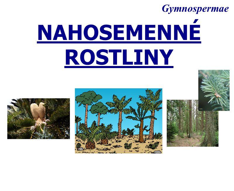 Gymnospermae NAHOSEMENNÉ ROSTLINY