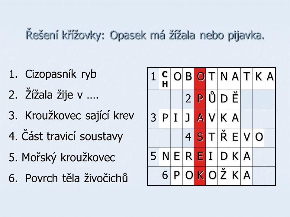 Řešení křížovky: Opasek má žížala nebo pijavka.