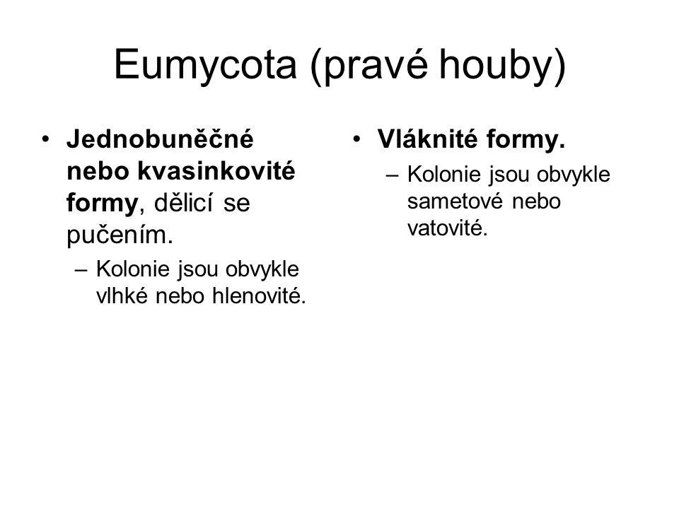Eumycota (pravé houby)