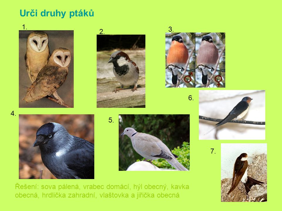 Urči druhy ptáků 1. 3. 2. 6. 4. 5. 7.
