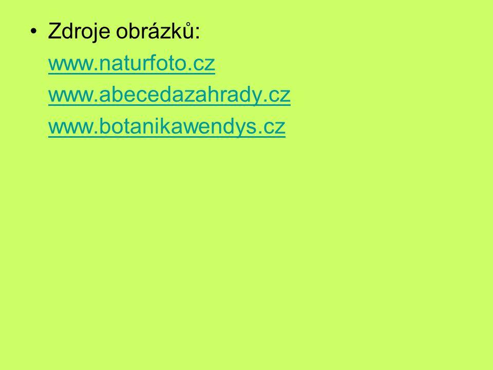 Zdroje obrázků: www.naturfoto.cz www.abecedazahrady.cz www.botanikawendys.cz
